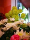 Vita krysantemum och milkweeds royaltyfri fotografi