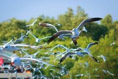 Vita libera di libertà e dell'uccello sopra l'oceano Fotografie Stock Libere da Diritti