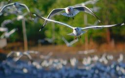 Vita libera di libertà e dell'uccello sopra l'oceano Fotografia Stock Libera da Diritti