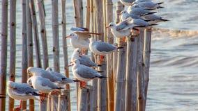 Vita libera di libertà e dell'uccello sopra l'oceano Immagine Stock