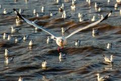 Vita libera di libertà e dell'uccello sopra l'oceano Immagini Stock Libere da Diritti