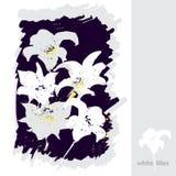 vita liljar royaltyfri illustrationer