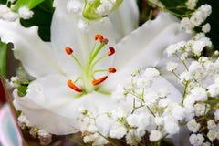 Vita liljor Royaltyfria Bilder