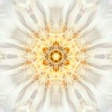 Vita Mandala Flower Center Koncentrisk kalejdoskopdesign Fotografering för Bildbyråer