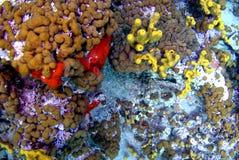 Vita marina Fotografia Stock
