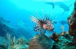 Vita marina immagine stock