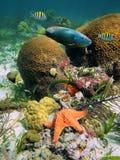 Vita marina Fotografie Stock Libere da Diritti