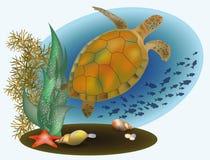 Vita marina con la tartaruga e le stelle marine Fotografie Stock Libere da Diritti