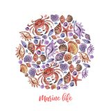 Vita marina del fumetto del cerchio dell'acquerello per progettazione della decorazione su fondo bianco Conchiglia dell'oceano royalty illustrazione gratis