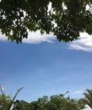 Vita moln bak träden royaltyfri bild