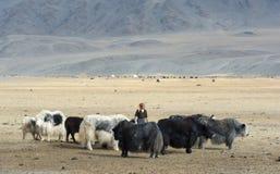 Vita mongola tradizionale 1 Fotografia Stock
