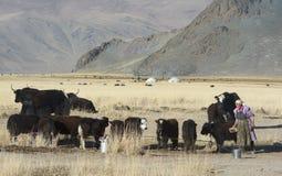 Vita mongola tradizionale 2 Immagine Stock