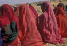 Vita nel deserto indiano fotografia stock libera da diritti