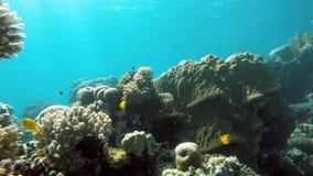 Vita nell'oceano Tuffandosi su una scogliera tropicale video d archivio