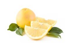 vita nya grapefrukter Arkivbild