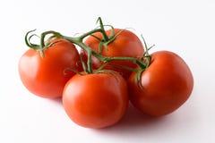 vita nya isolerade tomater för bakgrund Royaltyfri Fotografi
