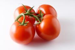 vita nya isolerade tomater för bakgrund Arkivbild
