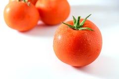 vita nya isolerade tomater för bakgrund Tomaten med tappar Arkivfoton