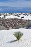 Vita nya sanddyn n - Mexiko Royaltyfria Bilder
