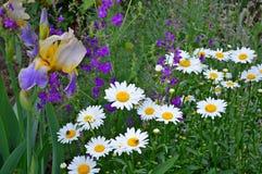 Vita och blåa blommor Royaltyfria Foton