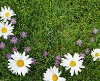 Vita och purpura blommor på gräs Arkivfoton