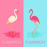 Vita och rosa flamingofåglar royaltyfri illustrationer