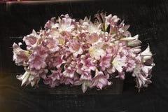 Vita och rosa liljor Arkivbilder