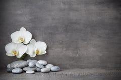 Vita orkidé- och brunnsortstenar på den gråa bakgrunden Arkivfoto