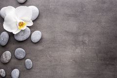 Vita orkidé- och brunnsortstenar på den gråa bakgrunden Royaltyfria Bilder