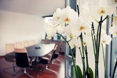 Vita orkidér i konferensrum, tomt kontor Arkivfoto
