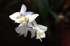 Vita orkidér på tropiska stränder royaltyfri foto