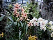 Vita orkidér, vita blommor, exotiska blommor Arkivbilder