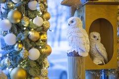 vita owls Arkivbilder