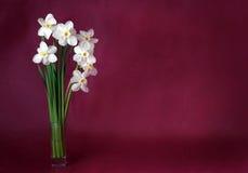 Vita påskliljor på en rödbrun bakgrund Royaltyfri Bild