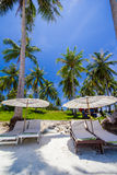 Vita paraply och stolar under kokosnöttree Arkivfoto