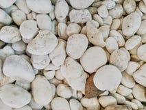 vita pebbles Royaltyfri Fotografi