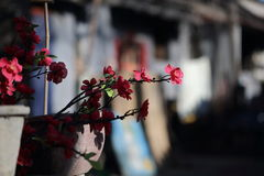 Vita a Pechino Hutong Fotografia Stock