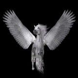 Vita Pegasus på svart Arkivbild