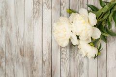 Vita pioner blommar på vit målade träplankor placera text Square avbildar Top beskådar Arkivfoton