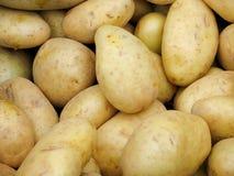 vita potatisar Arkivfoto