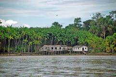 Vita quotidiana nella foresta pluviale Fotografie Stock
