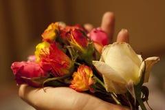 Vita & röda blommor i en kvinnlig hand Arkivbilder