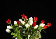 vita röda ro Royaltyfri Foto