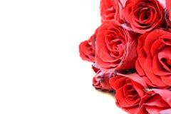 vita röda ro för bakgrund Fotografering för Bildbyråer