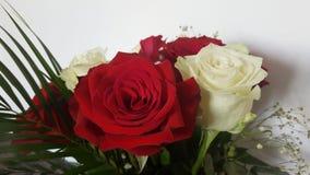 vita röda ro härliga blommor Arkivbilder