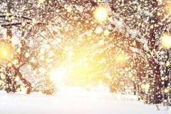 vita röda stjärnor för abstrakt för bakgrundsjul mörk för garnering modell för design Glödande ljus för magi i snöig skogXmas-tid fotografering för bildbyråer