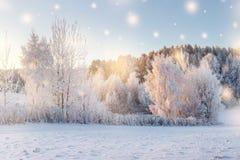 vita röda stjärnor för abstrakt för bakgrundsjul mörk för garnering modell för design Treesfält och snow Naturvinterlandskap med  royaltyfri foto