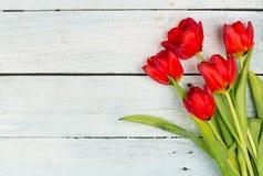 vita röda tulpan för bakgrund Royaltyfri Foto