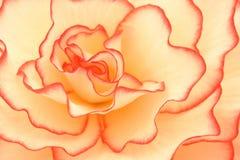vita röda twirls Royaltyfria Foton
