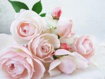 vita rosa ro för bakgrund Göra perfekt för bakgrund arkivbild